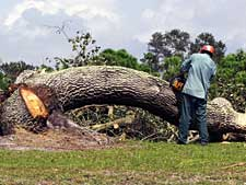 man using a chainsaw on a fallen tree