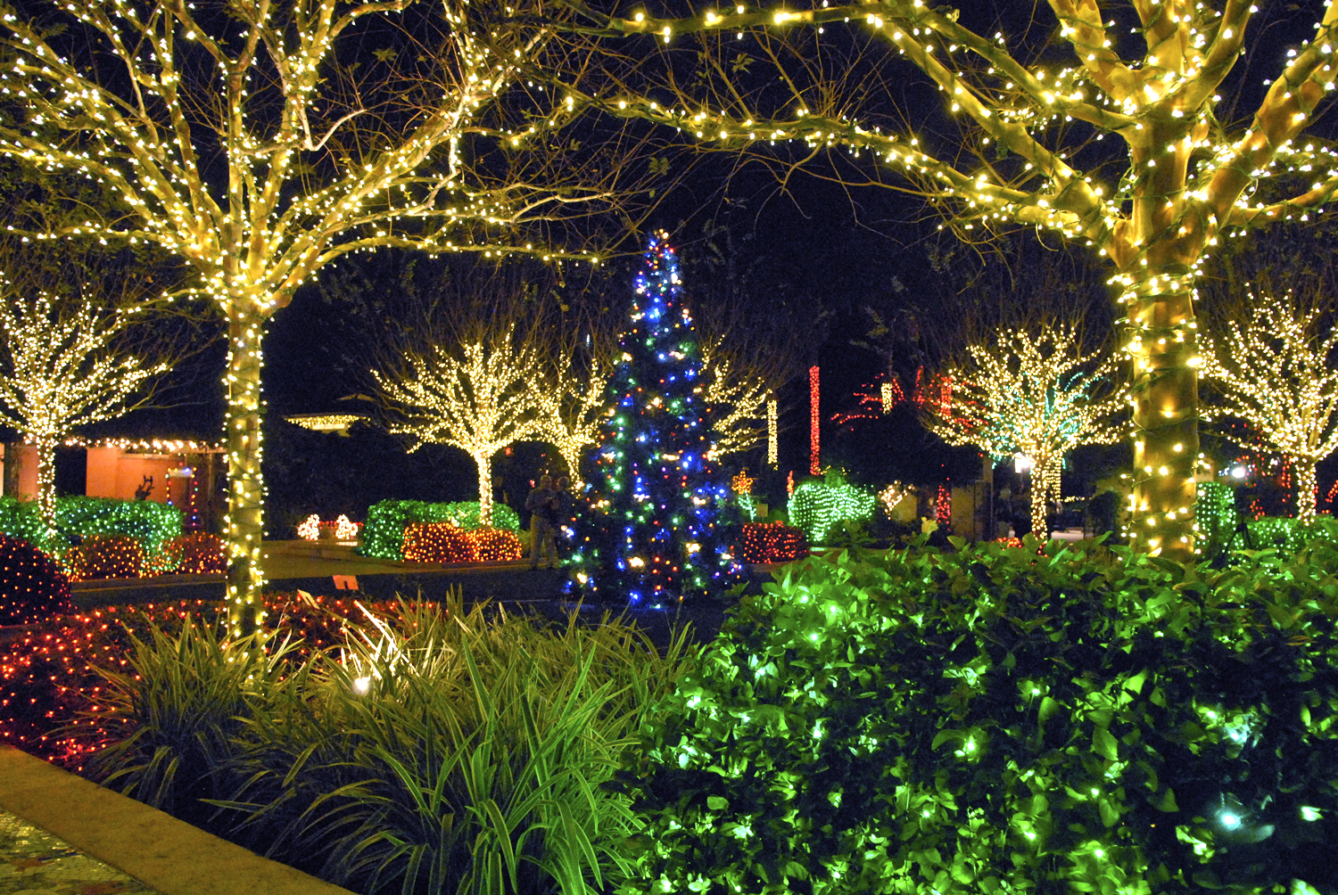 Pinellas county florida communications photo library for Botanical gardens christmas lights